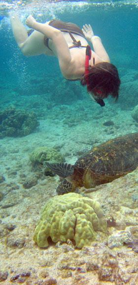 Big Island Snorkeling Rental